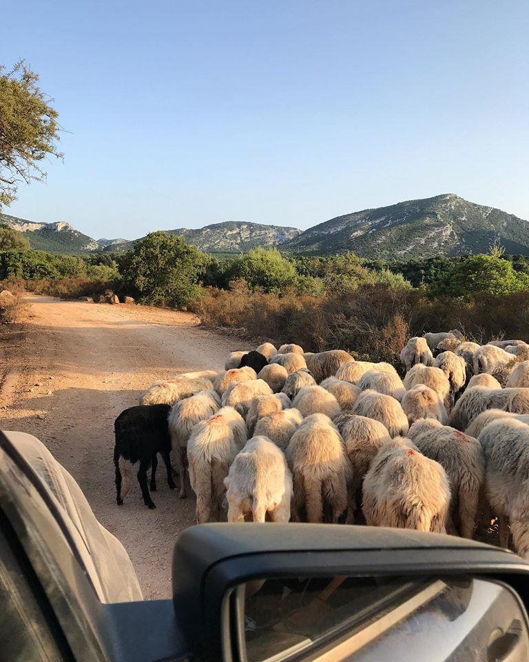 Usual driving at Golgo 🐐🐐